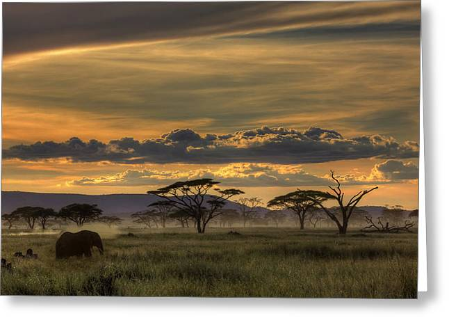 Wildlife Sunset Greeting Cards - Africa Greeting Card by Amnon Eichelberg