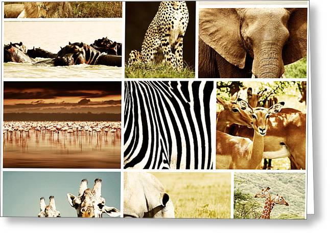 Reserve Greeting Cards - African Animals Safari Collage  Greeting Card by Anna Omelchenko