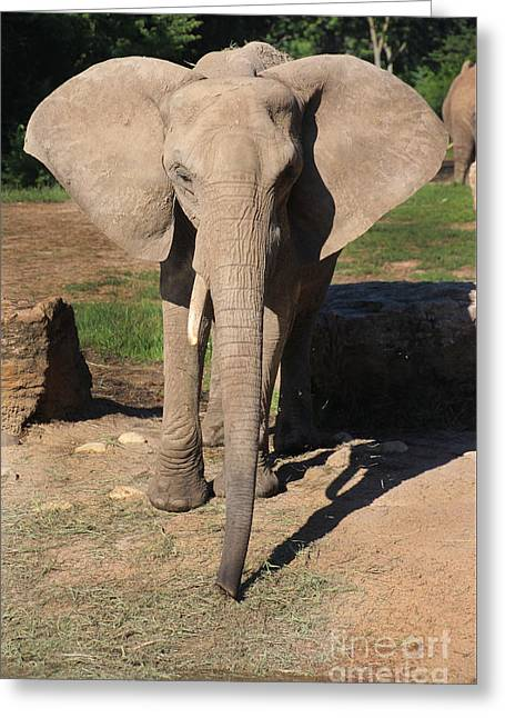 Elaphant Greeting Cards - African Elephant-0164 Greeting Card by Gary Gingrich Galleries