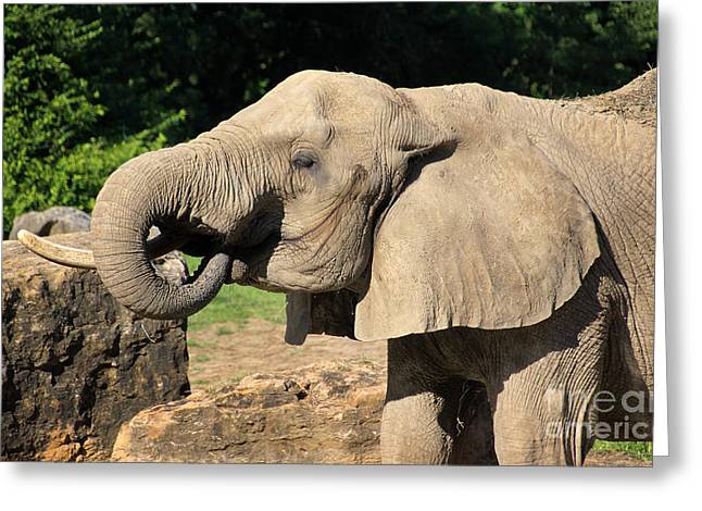 Elaphant Greeting Cards - African Elephant-0182 Greeting Card by Gary Gingrich Galleries