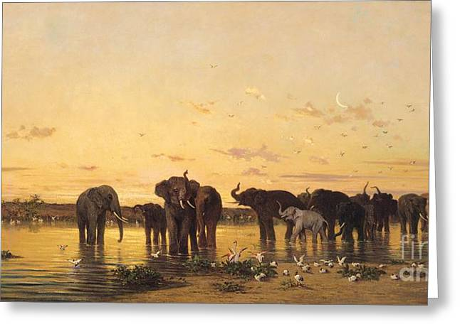 Water Bird Greeting Cards - African Elephants Greeting Card by Charles Emile de Tournemine