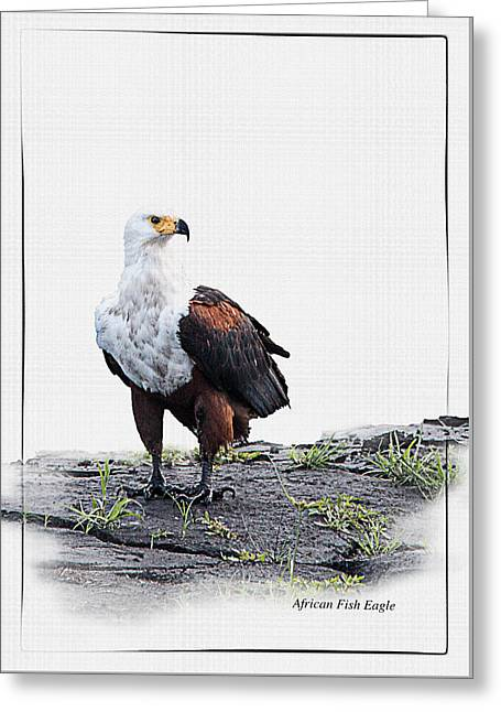 White Digital Art Greeting Cards - African Fish Eagle on white with id tag Greeting Card by Ronel Broderick