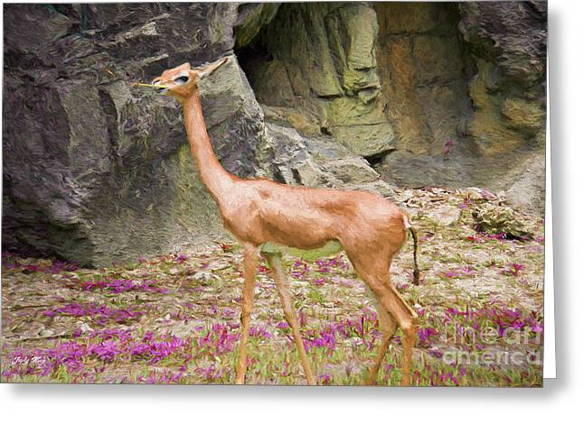 Rocks Greeting Cards - African Gerenuk Greeting Card by Judy Kay