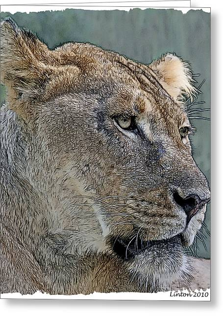 Lioness Greeting Cards - African Lioness Greeting Card by Larry Linton