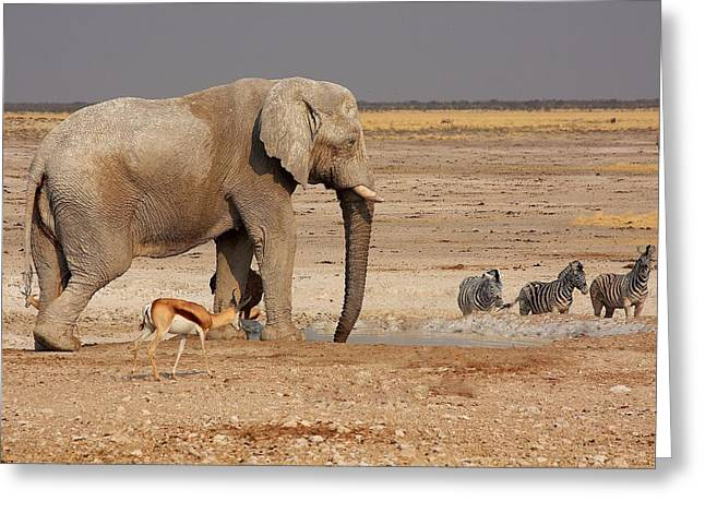 African Menagerie Greeting Card by Stacie Gary