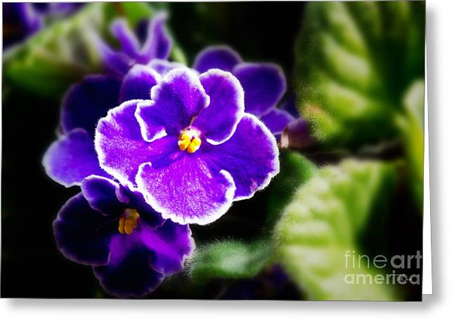 African Violet Greeting Card by Ms Judi