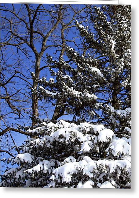 Blizzard Scenes Greeting Cards - After The Blizzard Greeting Card by Joanne Coyle