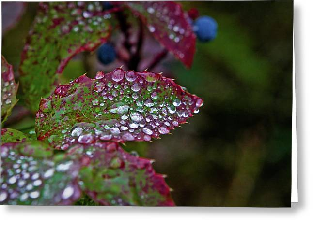 Colourful Greeting Cards - After the rain 1 Greeting Card by Patrick English