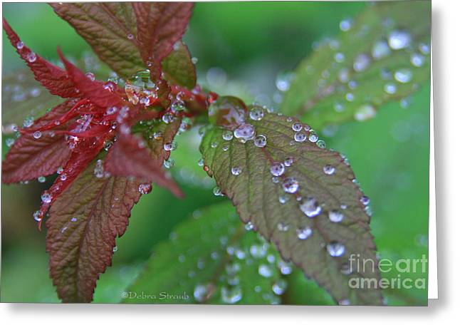 Spirea Greeting Cards - After The Rain Greeting Card by Debra Straub