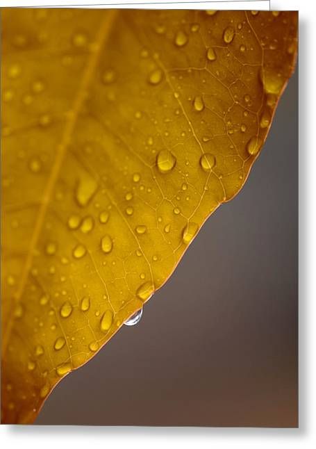 Yellow Ochre Greeting Cards - After the Rain Greeting Card by Stephen Anderson
