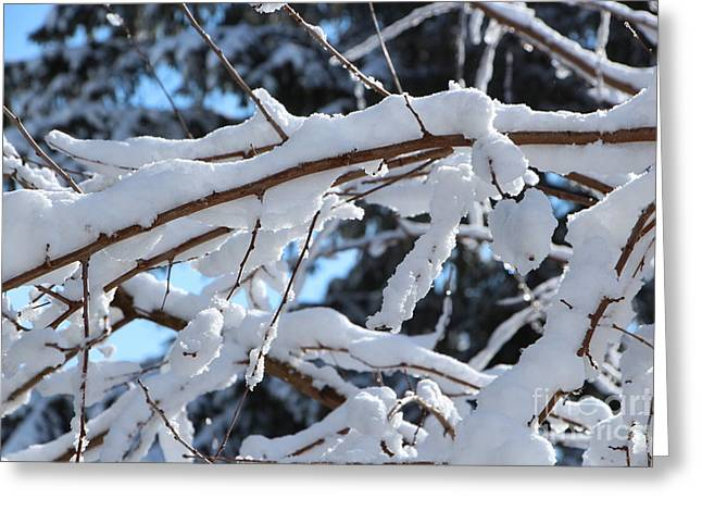 Wintry Greeting Cards - After the Snowstorm Greeting Card by Jari Hawk