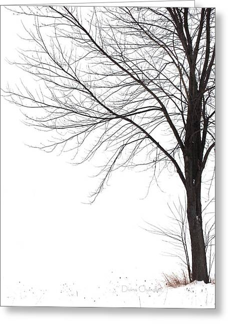 Winter Storm Greeting Cards - After the Storm Greeting Card by Diane Chandler