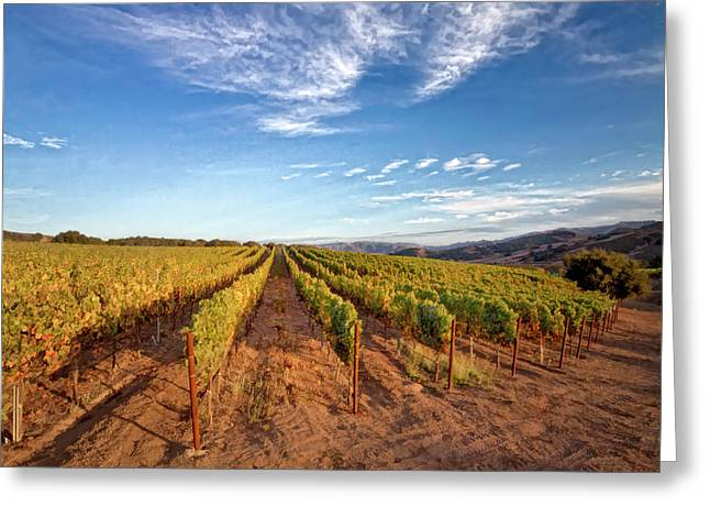 Viticulture Digital Greeting Cards - Afternoon at the Foley Vineyard Greeting Card by Lynn Andrews