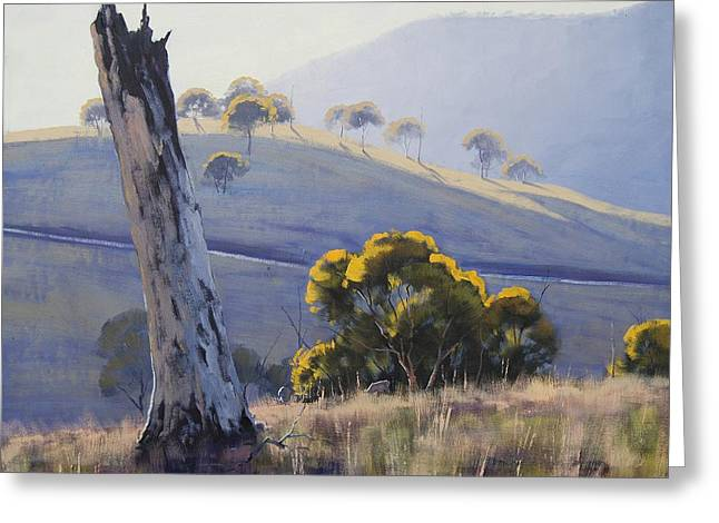 Australian Tree Greeting Cards - Afternoon Light Greeting Card by Graham Gercken