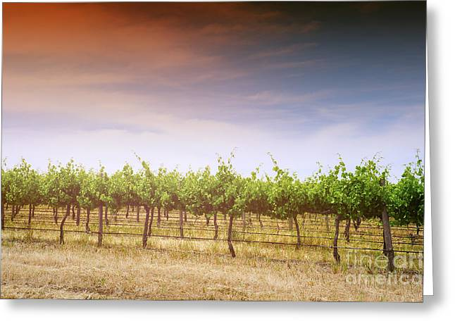 Vale Greeting Cards - Afternoon Light over Grapevines Greeting Card by Milleflore Images