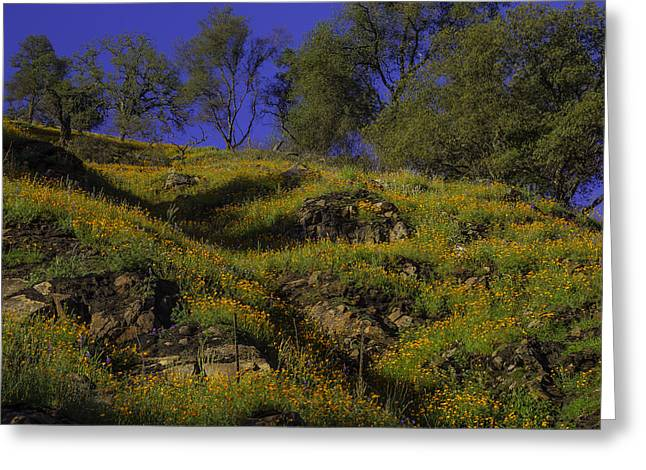 Afternoon Poppies Greeting Card by Garry Gay