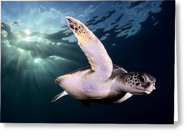 Wild Life Photographs Greeting Cards - Afternoon Greeting Card by Sergi Garcia