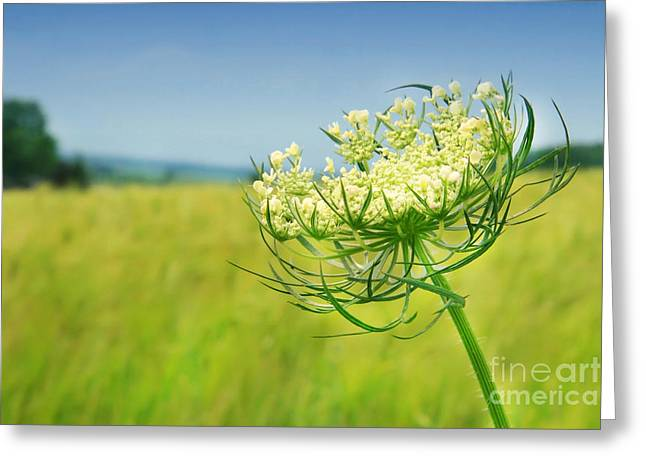 Against The Blue Sky Greeting Card by Sandra Cunningham