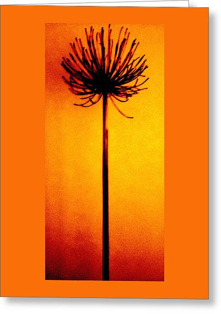 Greeting Cards - Agapanthus Burning Greeting Card by VIVA Anderson
