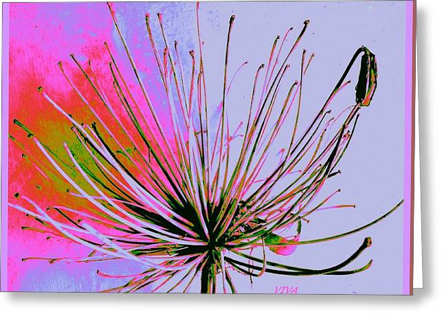 Greeting Cards - Agapanthus - In The Pink Greeting Card by VIVA Anderson