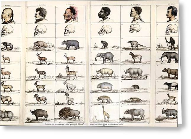 Negro Greeting Cards - Agassiz Polygenic Human Origins, 1854 Greeting Card by Paul D. Stewart