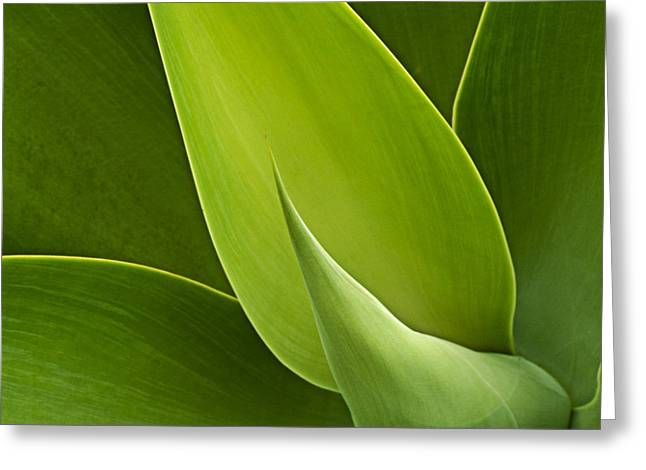 Monocots Greeting Cards - Agave Greeting Card by Heiko Koehrer-Wagner