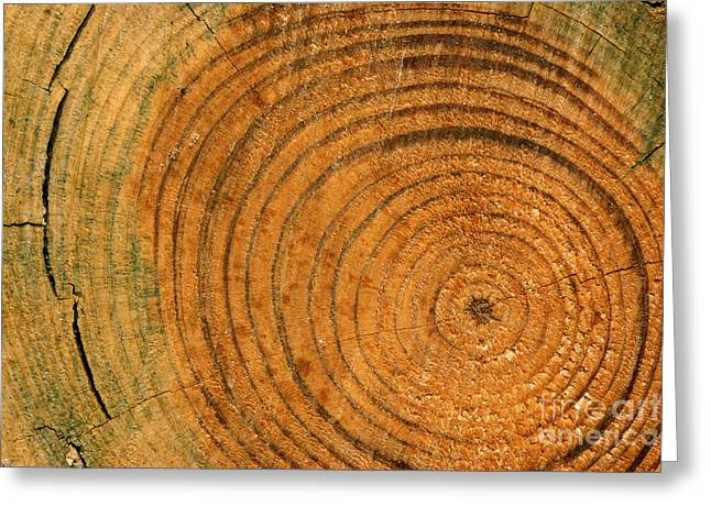 Saw Greeting Cards - Age Circles Greeting Card by Laura Jelenkovich