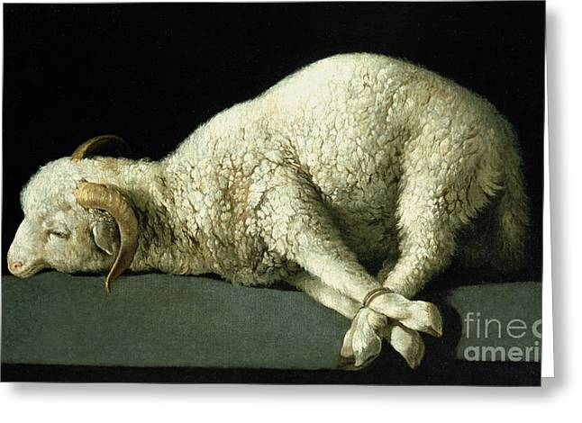 Des Paintings Greeting Cards - Agnus Dei Greeting Card by Francisco de Zurbaran