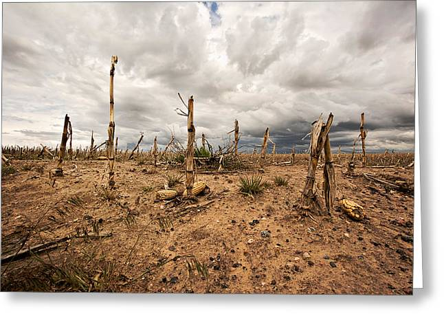 Leftovers Greeting Cards - Agricultural Wasteland Greeting Card by Scott Pellegrin