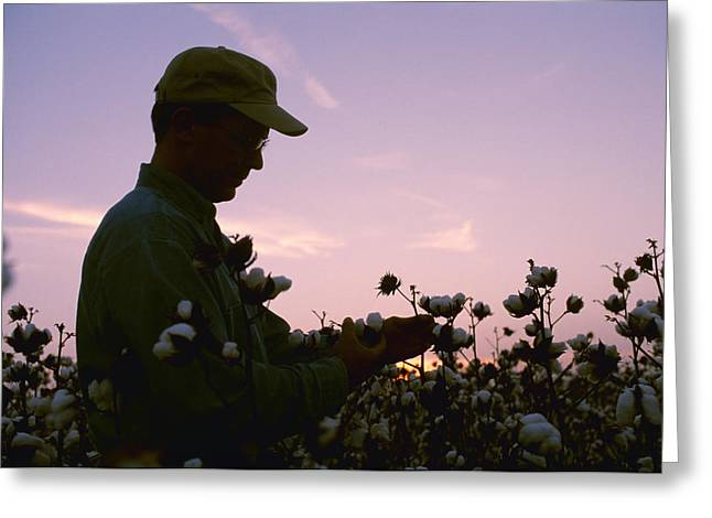 Arkansas Greeting Cards - Agriculture - A Farmer   Grower Greeting Card by Bill Barksdale