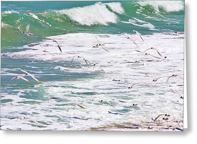 Tern Greeting Cards - Air And Sea Show Greeting Card by Chuck  Hicks