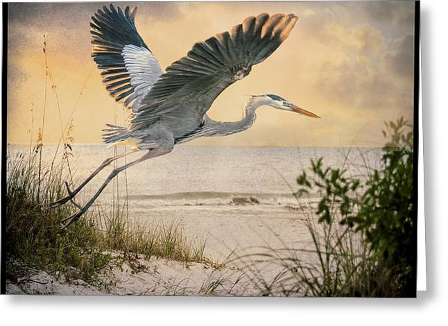 On The Beach Greeting Cards - Airborne Greeting Card by Brian Tarr