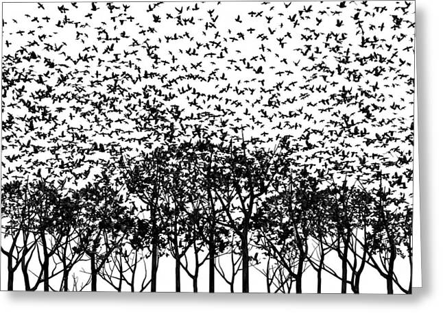 Corvus Corax Greeting Cards - Aki Monochrome Greeting Card by Cynthia Decker
