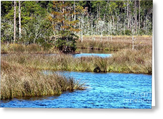 Alabama Photographs Greeting Cards - Alabama Waterway Greeting Card by Carol Groenen