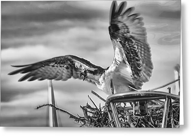 Hunting Bird Greeting Cards - Alarmed  Greeting Card by Glenn Thompson