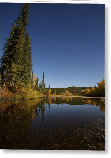 Fishing Creek Greeting Cards - ALASKA Early Autumn Calm Greeting Card by Julian Wicksteed