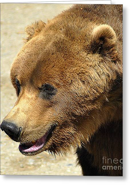 Berry Greeting Cards - Alaskan Brown Bear Greeting Card by Diane E Berry