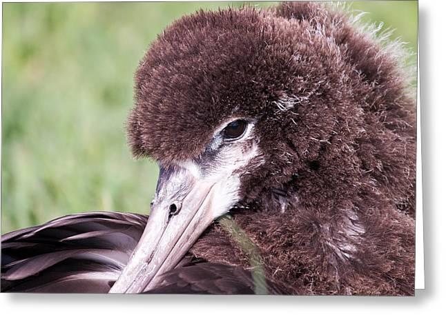 Albatross Greeting Card by Dean Farrell
