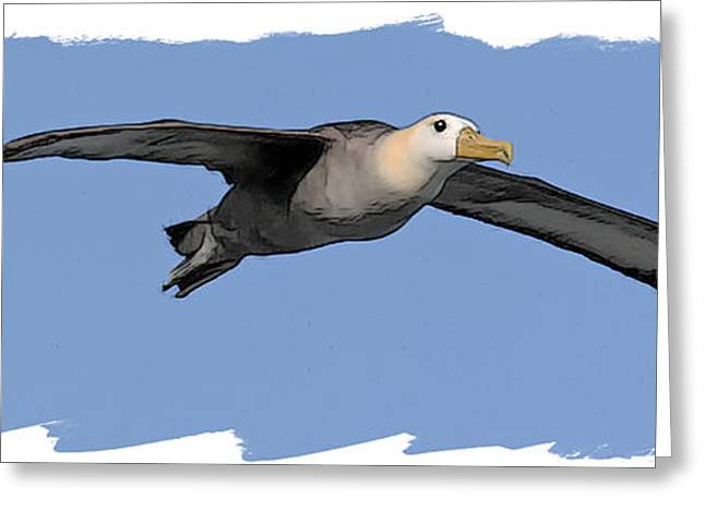Sea Birds Greeting Cards - Albatross Greeting Card by Larry Linton