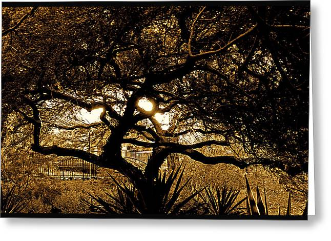 Silhouette Of Tree Greeting Cards - Albero Luminoso Greeting Card by Courtney Lively