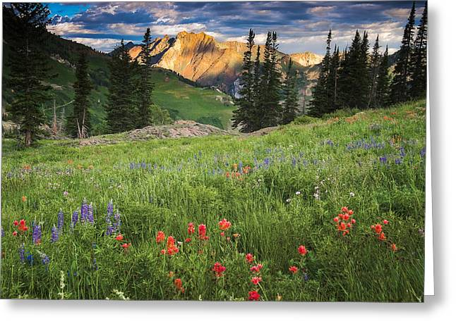 Albion Basin Wildflowers Greeting Card by Utah Images