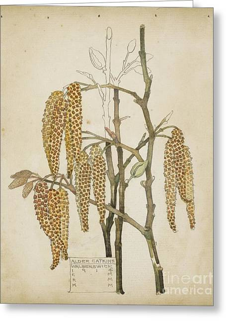Rennie Greeting Cards - Alder Catkins Greeting Card by Celestial Images