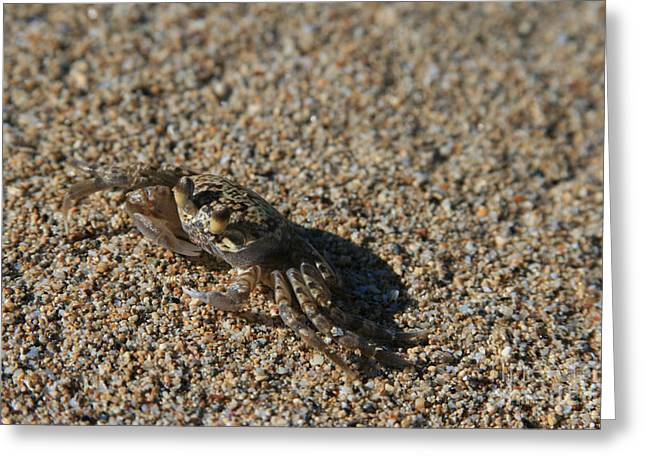 Ourjrny Greeting Cards - Ale eke Ohiki Kuau Sand Crab Greeting Card by Sharon Mau