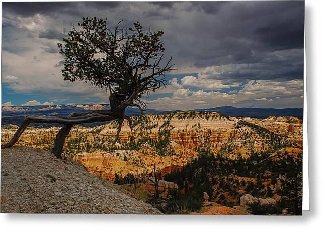 Tree Roots Greeting Cards - Alien Flora Greeting Card by Jeff Waddell