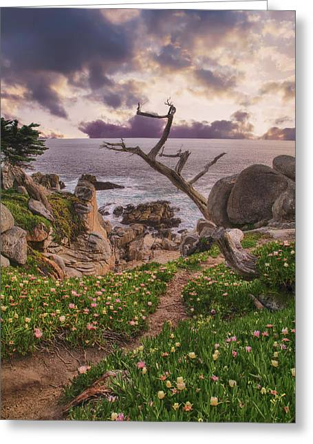 All Along Greeting Card by Laurie Search