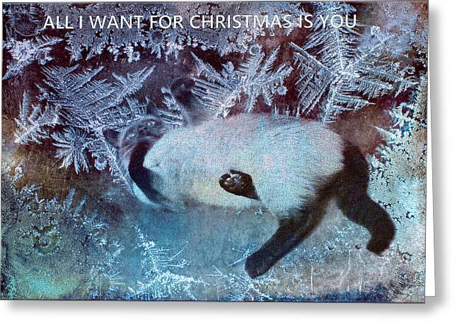 Siamese Cat Greeting Card Greeting Cards - All I Want For Christmas Is You Greeting Card by Theresa Campbell