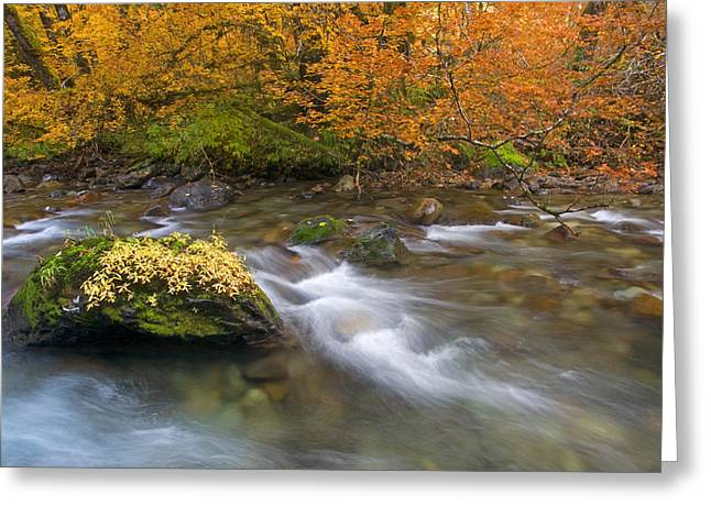 Moss Greeting Cards - All that is Gold Greeting Card by Mike  Dawson