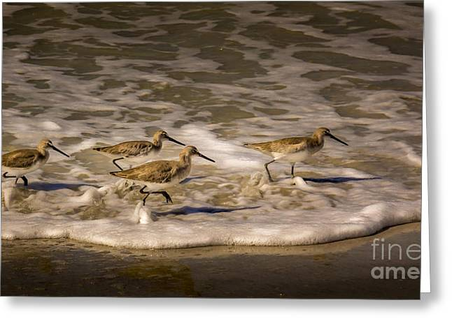 Sea Birds Greeting Cards - All Together Now Greeting Card by Marvin Spates