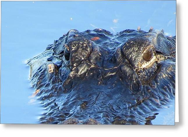 Wildlife Refuge. Greeting Cards - Alligator Head Closeup Greeting Card by Melinda Saminski