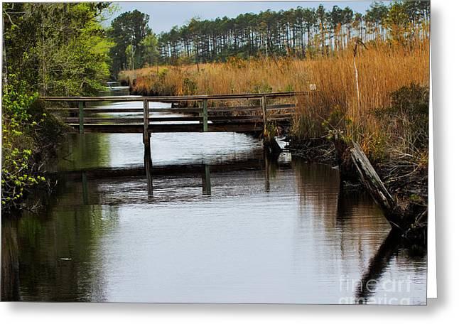 Wildlife Refuge. Greeting Cards - Alligator River National Wildlife Refuge Greeting Card by Tom Gari Gallery-Three-Photography